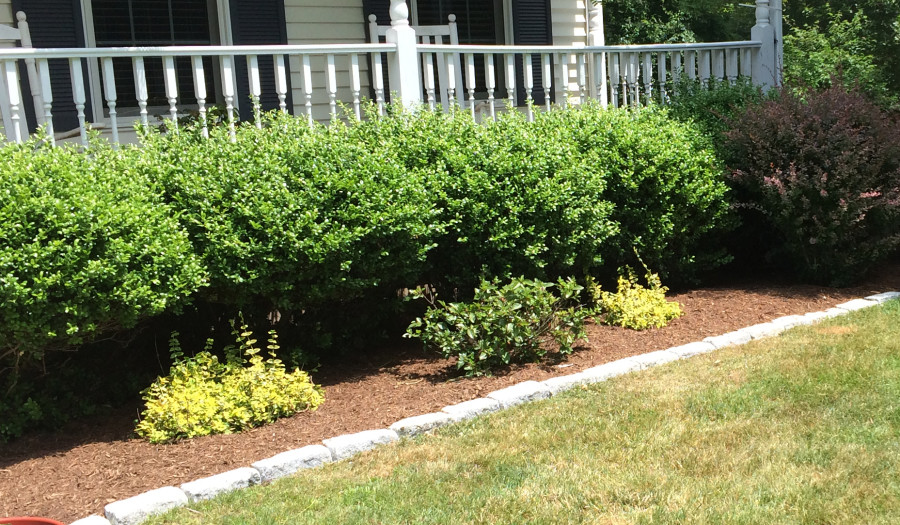 Landscape Maintenance by DeCillis Land Services, LLC